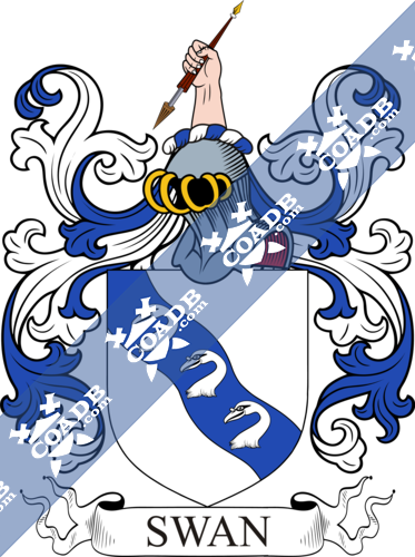 swan-withcrest-7.png